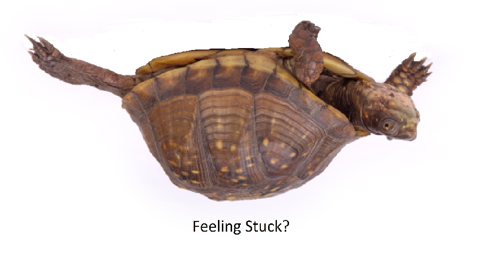 Feeling Stuck Turtle